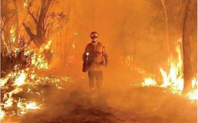 Australia Bushfire Relief – a list of how you can help